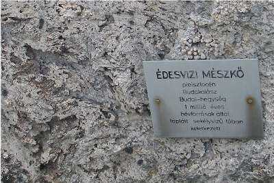 Limestone tufa rock