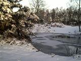 Frozen pond on Galleywood Common