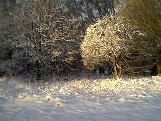 Snow scene on Galleywood Common