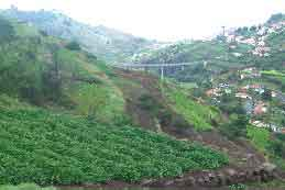 Cultivated terraces, Madeira