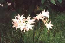 Wild flowers in Madeira