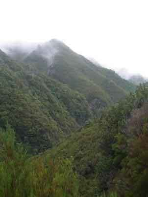 Views of rain forest in Madeira, while wlaking the lavadas