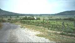 Hungarian vineyards, only red grape area is the peninsular along north shore of Lake Balaton
